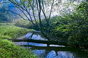 Tennessee River Prints - Mountain Stream Print by Debra and Dave Vanderlaan