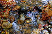 Trout Greeting Card Photo Posters - Mountain Stream Poster by Eunice Miller
