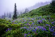 Randall Branham - Mountains of Flowers