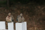 Elka Lange - Mourning Doves