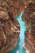 Grand Canyon Photos - Mouth of Havasu Creek by Mike Buchheit