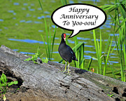 Special Occasion Digital Art Prints - Mouthy Moorhen Anniversary Card Print by Al Powell Photography USA