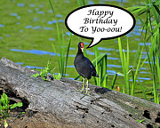 Al Powell Photography Usa Digital Art Prints - Mouthy Moorhen Birthday Card Print by Al Powell Photography USA