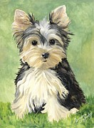 Yorkshire Terrier Art Framed Prints - Moxie Roxie Framed Print by Suzanne Schaefer
