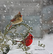Male Cardinals Prints - Mr. and Mrs. Cardinal Print by Denise Romano