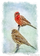 Mr And Mrs House Finch Digital Paint With Frame Print by Debbie Portwood