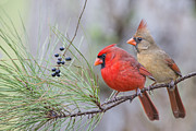 Bonnie Barry - Mr. and Mrs. Redbird in...