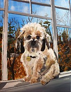 Havanese Paintings - Mr. Bradley by Adrienne Miller