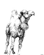 Camel Drawings - Mr Camel to You by Lizi Beard-Ward