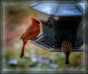 Brenda Bostic - Mr. Cardinal Sharing...