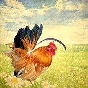 Country Town Posters - Mr. Rooster Greets the Day Poster by Lisa Knechtel