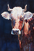 Steer Framed Prints - Mrs. Stevens Framed Print by Patricia A Griffin