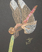Dragonflies Drawings - Ms Pinky by Marcia Weller-Wenbert