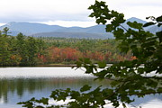Mt Chocorua Posters - MT Chocorua Through the Trees Poster by Denyse Duhaime