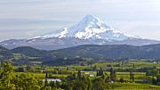 Fertile Posters - Mt. Hood and Hood River valley panorama. Poster by Gino Rigucci