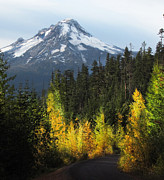 Yellow Leaves Framed Prints - Mt Hood Framed Print by Angie Vogel