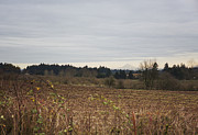 Plowed Fields Posters - Mt Hood from a Distance Poster by Belinda Greb