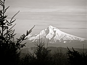 Gael Graysen - Mt. Hood from Wheatridge...