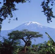 Featured Posters - Mt. Kilimanjaro,moshi,tanzania Poster by David Constantine