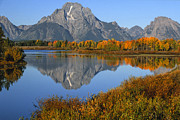 Western United States Photo Framed Prints - Mt. Moran Fall Reflection  Framed Print by Sandra Bronstein