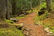 Adam Jewell - Mt. Rainer Serenity