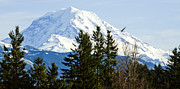 Maryjane Armstrong Framed Prints - Mt. Rainier and A Bald Eagle  Framed Print by MaryJane Armstrong
