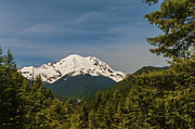 Mt Rainier National Park Art - Mt Rainier by Brian Harig