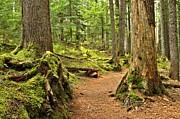 Adam Jewell - Mt. Rainier Trail