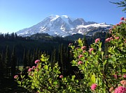 Jerry Browning - Mt. Rainier