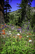 Mount Rose Framed Prints - Mt. Rose Highway Scenic Wildflowers Framed Print by LeeAnn McLaneGoetz McLaneGoetzStudioLLCcom
