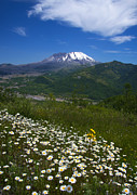Mike Dawson - Mt. St. Helens View