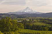Fertile Posters - Mt.Hood and Hood River valley panorama at sunset.. Poster by Gino Rigucci