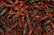 Crawfish Art - Mud Bugs by Frederick Stevens