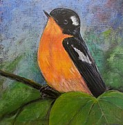 Flycatcher Painting Originals - Mugimaki Flycatcher by Karen Bradley