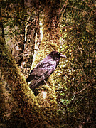 Gothic Crows Prints - Muir Woods Raven 002 Print by Lance Vaughn