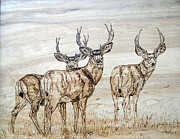 Wood Burn Pyrography Prints - Mule Deer Bachelor Party Print by Melissa Fuller