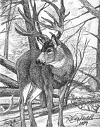 Deer Drawings Posters - Mule Deer Buck Poster by Karon Melillo DeVega
