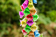 Foxglove Flowers Photos - Multi Colored Flowers by Jess Kraft