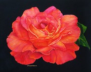 Margaret Newcomb - Multi-Colored Rose Oils...