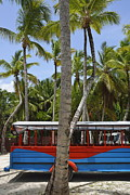 Coconut Palm Tree Framed Prints - Multi-Colored truck and coconuts trees Framed Print by Sami Sarkis