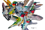Hummingbird Prints - Multi-Hummers Print by Daniel  Adams