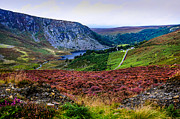 Lush Vegetation Prints - Multicolored Carpet of Wicklow Hills. Ireland Print by Jenny Rainbow