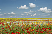 Summer Scene Framed Prints - Multicoloured Field Framed Print by Tim Gainey