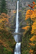 A River In Autumn Posters - Multnomah Fall Decorations Poster by Adam Jewell