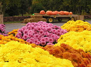 Farm Stand Art - Mums and Pumpkins by Julie Grandfield