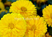Diana Haronis Acrylic Prints - Mums for Mum Acrylic Print by Diana Haronis