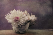 Violet Purple Prints - Mums In A Cup Print by Priska Wettstein