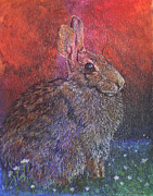 Rabbit Drawings - Munching On Clover by Sari Sauls