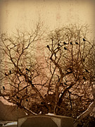 Flocks Of Birds Posters - Murder in the Cemetery Poster by Brenda Conrad