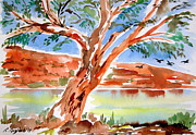 Australia Drawings - Murray River Australia by Roberto Gagliardi